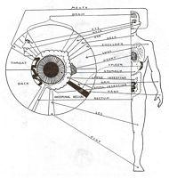 Herbal Clinic Swansea - Iridology Left Side