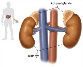 The Adrenals