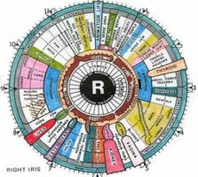 Herbal Clinic Swansea - Iridology